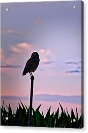 Burrowing Owl On A Stick Acrylic Print