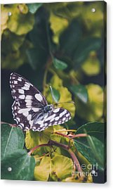 Butterfly, Flower, Colorful, Nature Acrylic Print