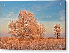Canada, Manitoba, Lorette Acrylic Print by Jaynes Gallery