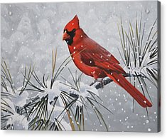 Acrylic Print featuring the painting Cardinal In The Snow by Peter Mathios