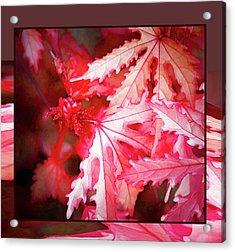 Celebration - Acrylic Print