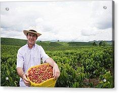 Coffee Farmer In A Field Holding Fresh Acrylic Print