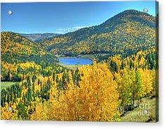 Colorado Gold Acrylic Print