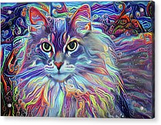 Colorful Long Haired Cat Art Acrylic Print
