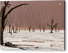 Deadvlei Desert Acrylic Print