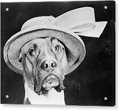 Doggy Hat Acrylic Print by Keystone Features