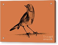 Drawing Of Hummingbird. Illustration Acrylic Print