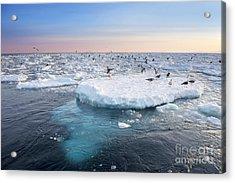 Drift Ice In Shiretoko, Hokkaido, Japan Acrylic Print