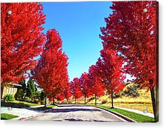Acrylic Print featuring the photograph Fall In Boise by Dart and Suze Humeston