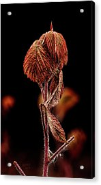 Acrylic Print featuring the photograph Fall Leaves by Fred Denner