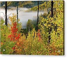Fall Morning 2 Acrylic Print by Leland D Howard