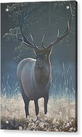 Acrylic Print featuring the painting First Light - Bull Elk by Peter Mathios