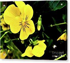 Flowers Hanging No. Hgf17 Acrylic Print
