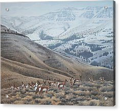 Acrylic Print featuring the painting High Country Pronghorn by Peter Mathios