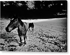 Acrylic Print featuring the photograph Horses On The Palouse by David Patterson