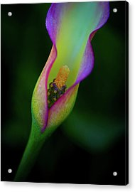 Acrylic Print featuring the photograph Lily  by John Rodrigues
