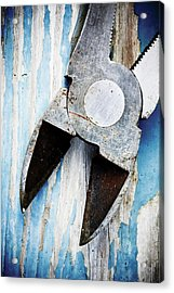 Macro Detail Shoots Acrylic Print