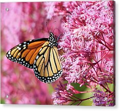 Acrylic Print featuring the photograph Monarch Butterfly by Debbie Stahre