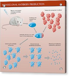 Monoclonal Antibody Production Acrylic Print by Monica Schroeder
