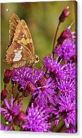 Moth On Purple Flowers Acrylic Print