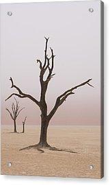 Namibia Fog Shrouds The Dead Acacia Acrylic Print by Brenda Tharp