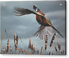 Acrylic Print featuring the painting Out Of The Cattails by Peter Mathios