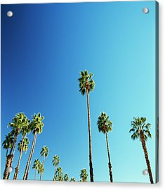 Palm Trees Against Blue Sky Acrylic Print