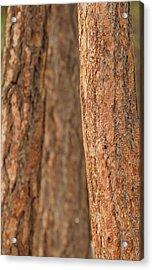 Ponderosa Pine Bark Detail Acrylic Print