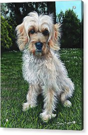 Portrait Of Toffee Acrylic Print