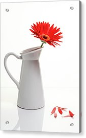 Acrylic Print featuring the photograph Red Gazania Flower On A White Stylish Vase. Creative Still Life  by Michalakis Ppalis