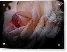 Acrylic Print featuring the photograph Rose Of Summer by Allin Sorenson