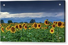 Acrylic Print featuring the photograph Sunflowers Under A Stormy Sky by John De Bord