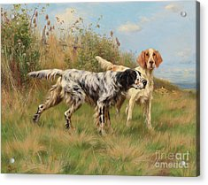 Two English Setters Acrylic Print