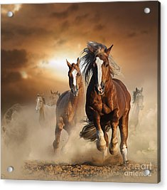 Two Wild Chestnut Horses Running Acrylic Print