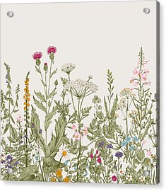 Vector Seamless Floral Border. Herbs Acrylic Print