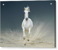 White Horse Galloping Acrylic Print by Christiana Stawski