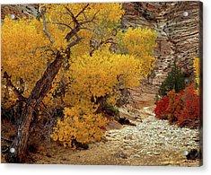 Zion National Park Autumn Acrylic Print