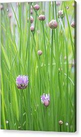 Usa, Washington State, Seabeck Acrylic Print