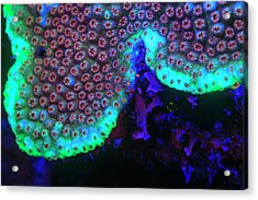 Night Dive At Barrier Reef Near Saint Acrylic Print by Stuart Westmorland