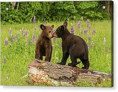 Usa, Minnesota, Minnesota Wildlife Acrylic Print by Jaynes Gallery