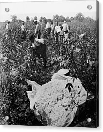 19th Century Cotton Picking Acrylic Print by Lightfoot