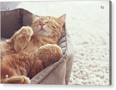 A Ginger Cat Sleeps In His Soft Cozy Acrylic Print