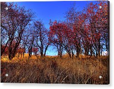 Acrylic Print featuring the photograph Autumn Light by David Patterson