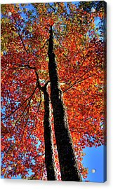 Acrylic Print featuring the photograph Autumn Reds by David Patterson