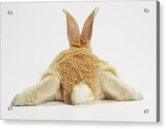 Beige Bunny Rabbit On White Background Acrylic Print by American Images Inc