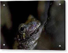 Grey Tree Frog Acrylic Print