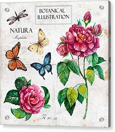 Hand Drawn Botanical Illustration In Acrylic Print