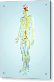 Nervous System, Artwork Acrylic Print by Sciepro