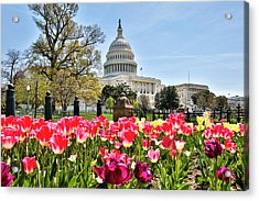 Usa, Washington D Acrylic Print by Hollice Looney