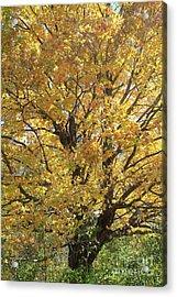 2018 Edna's Tree Up Close Acrylic Print
